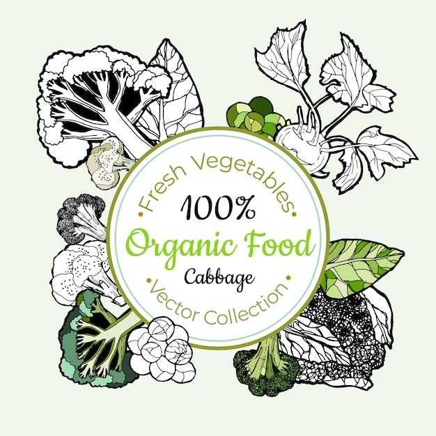 Etiqueta do vintage dos mantimentos vegetais dos brócolis da couve Vetor Premium