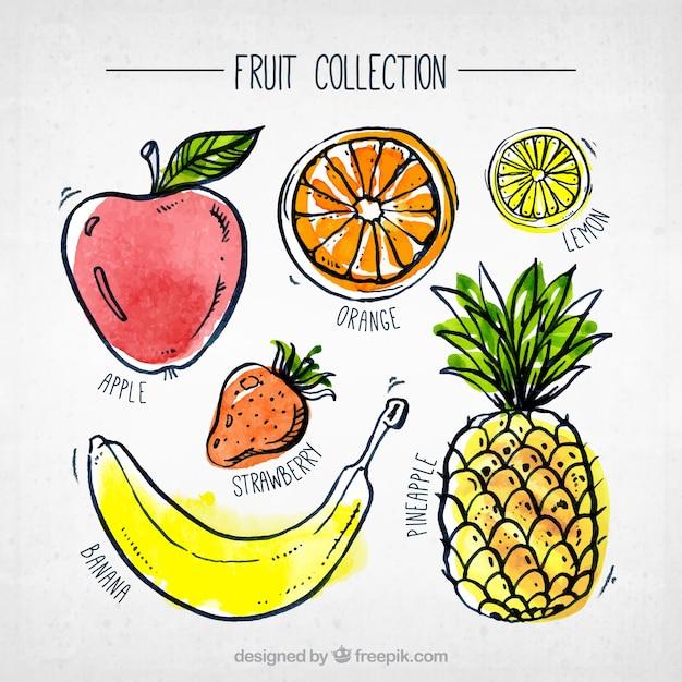 Fantástica, cobrança, aquarela, pedaços, fruta Vetor grátis
