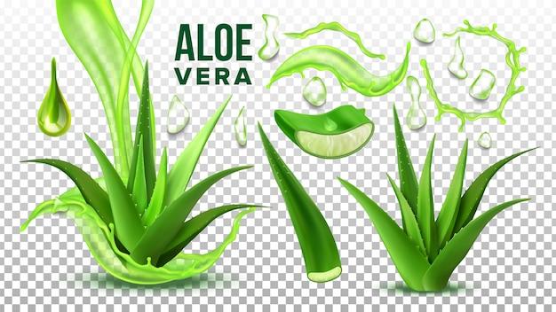 Farmácia suculenta aloe vera Vetor Premium