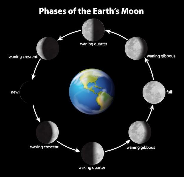 Fases da lua Vetor grátis