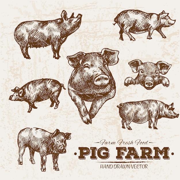 Fazenda de porco desenhada mão Vetor Premium