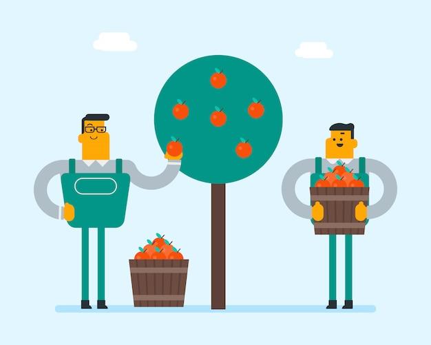 Fazendeiros caucasianos que recolhem maçãs no jardim. Vetor Premium