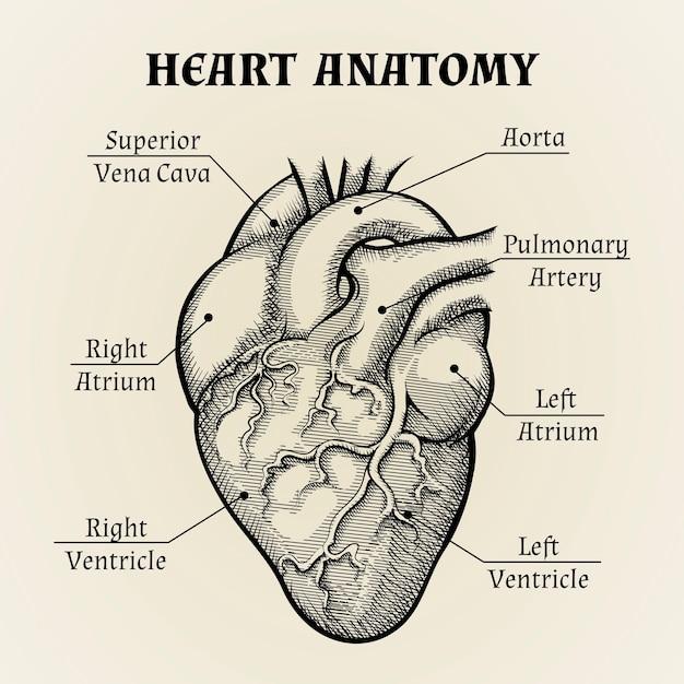Feche acima da anatomia do coração preto e branco com design gráfico de etiquetas. Vetor grátis