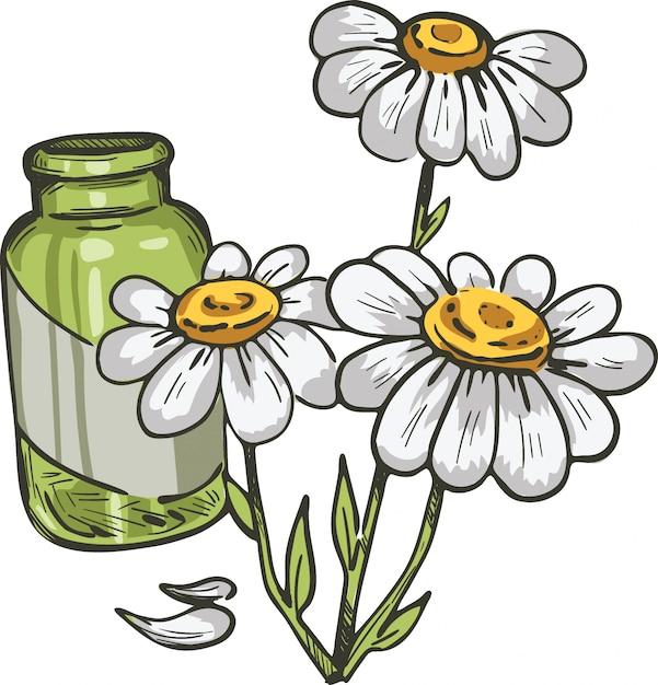 Feverfew ou camomila ou planta semelhante a camomila margarida. ilustração em vetor tanacetum parthenium Vetor Premium