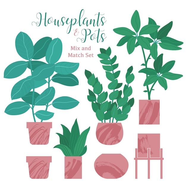 Ficus, monstera, cacto, zamioculcas e vários vasos Vetor Premium