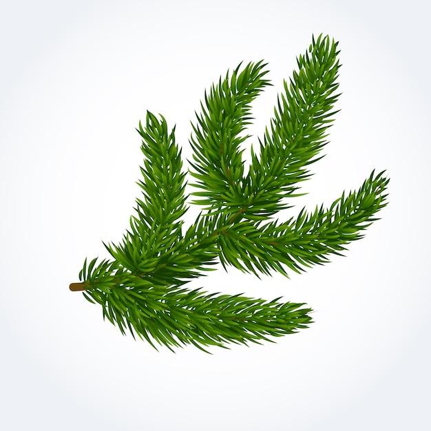 Filial de árvore verde Vetor grátis