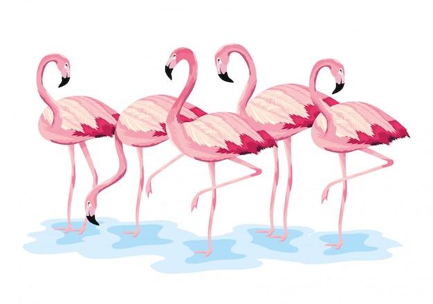 Flamingos tropicais animais selvagens exóticos Vetor Premium