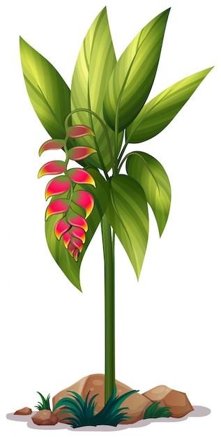 Flor ave do paraíso em branco Vetor grátis