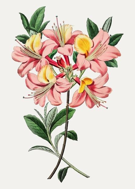 Flor de azaléia rosa Vetor grátis