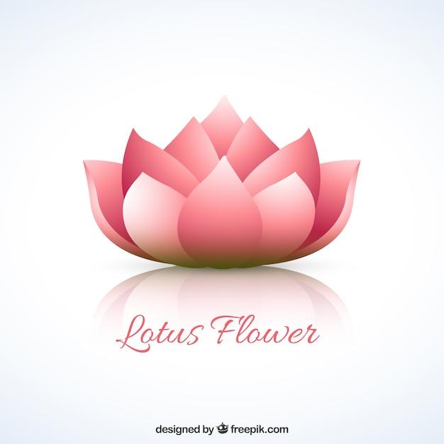Flor de lotus Vetor grátis
