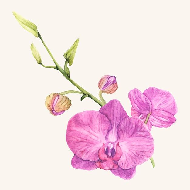 Flor de orquídea desenhada de mão isolada Vetor grátis