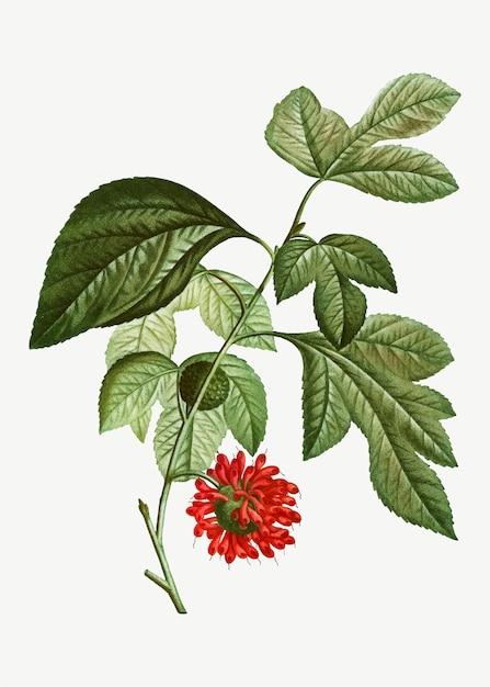 Flor de papel vermelho mullberry Vetor grátis