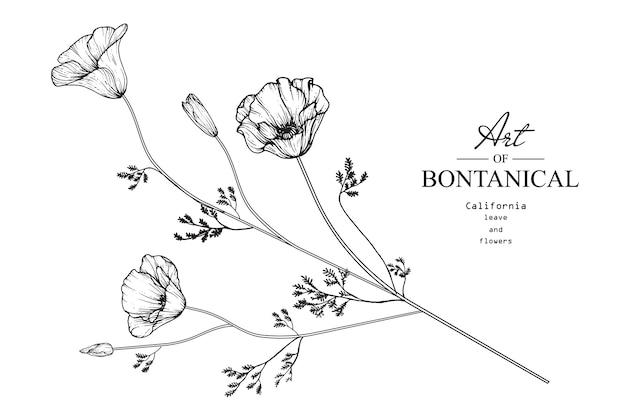 Flor de papoula califórnia e desenho de folha Vetor Premium