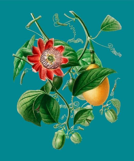 Flor Vetor grátis