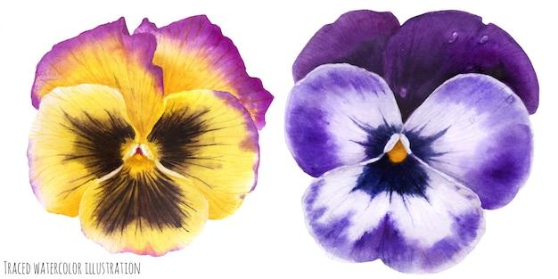 Flores amor-perfeito Vetor Premium