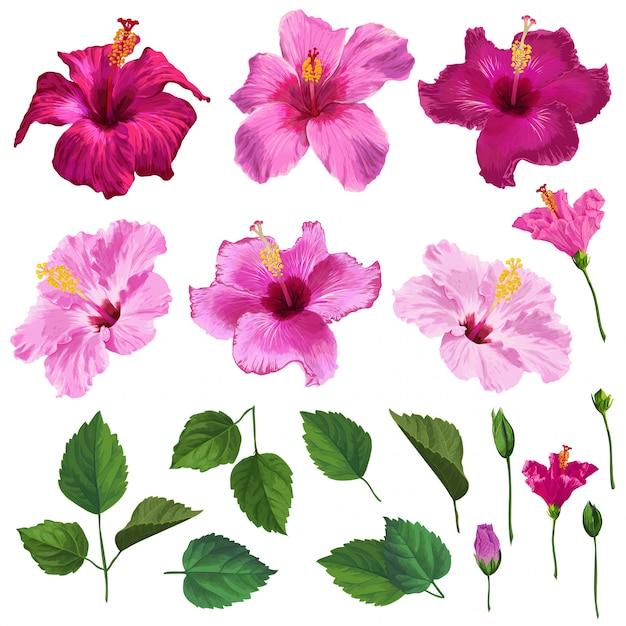 Flores de hibisco, folhas e ramos Vetor Premium
