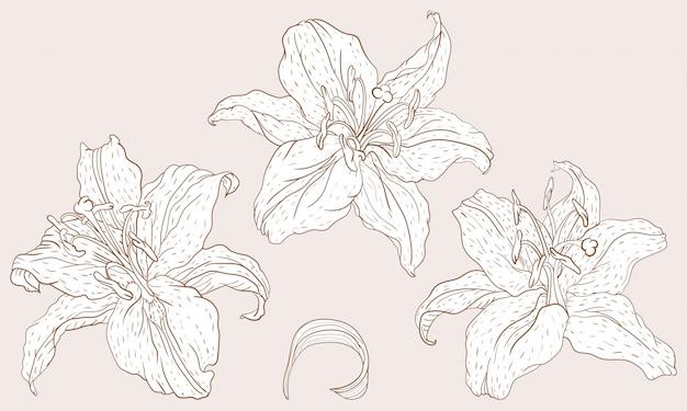 Flores de lírio oriental Vetor Premium