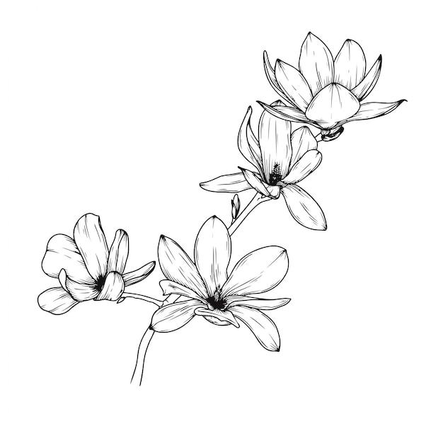 Flores de magnólia Vetor Premium
