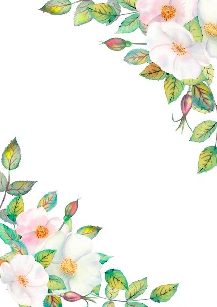 Flores de rosa mosqueta branca Vetor Premium