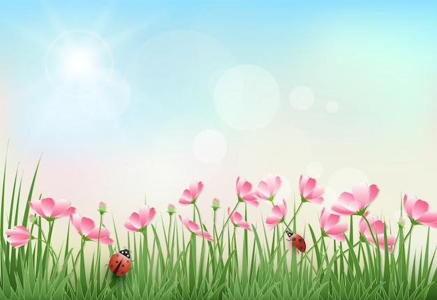 Flores do cosmos e estação de primavera do céu azul Vetor Premium