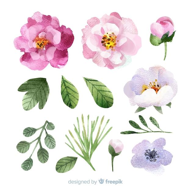 Flores e folhas em aquarela Vetor grátis