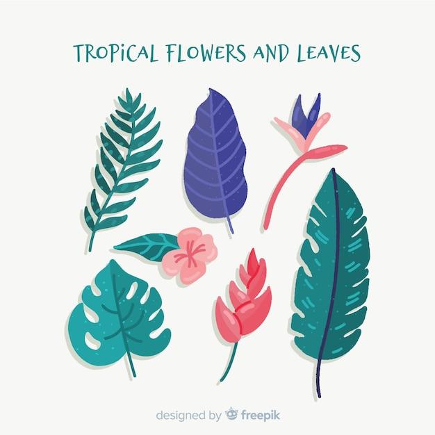 Flores e folhas tropicais de mão desenhada Vetor grátis