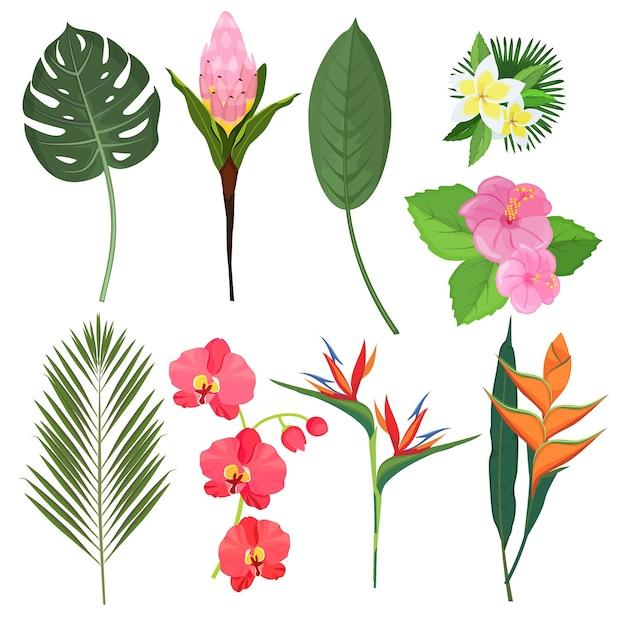 Flores tropicais. flores de plantas de decoração de bali polinésia de buquês de ervas exóticas. ilustração flor planta, folhagem exótica floral ilustração colorida Vetor Premium