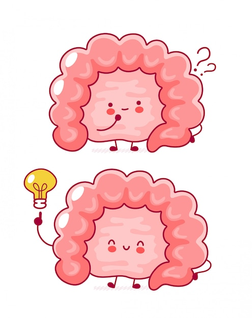 Fofo feliz engraçado órgão intestino humano com ponto de interrogação e lâmpada de ideia. Vetor Premium