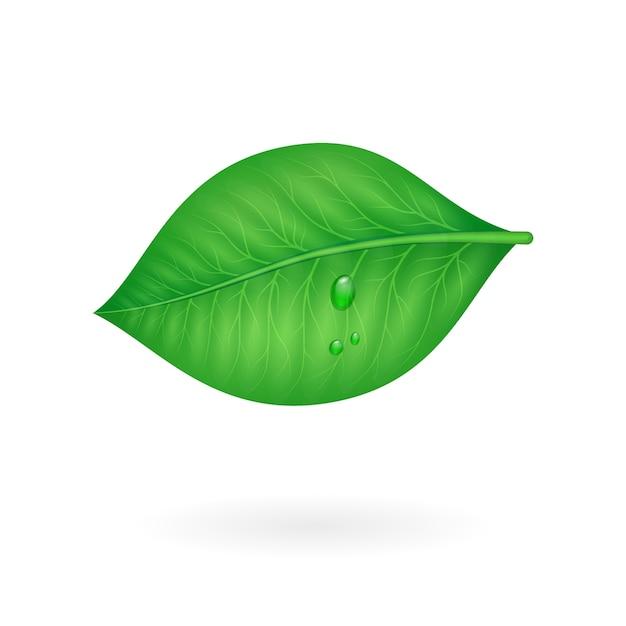 Folha verde Vetor grátis