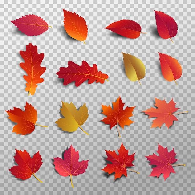 Folha vermelha com sombra isolada Vetor Premium