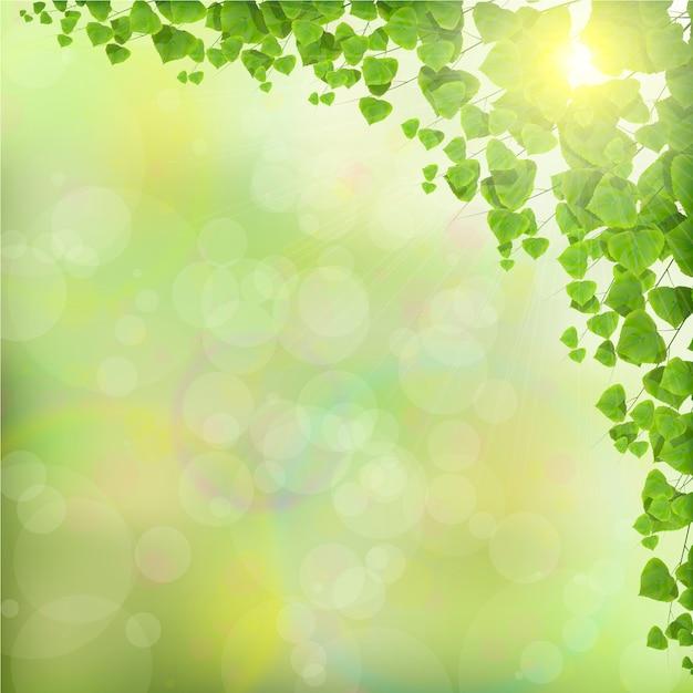 Folhas de árvore no fundo verde abstrato Vetor Premium