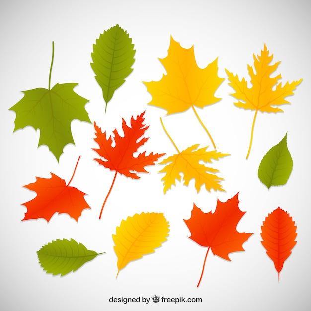 Folhas De árvores Coníferas
