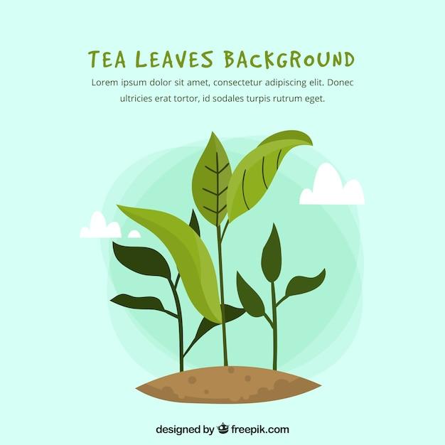 Folhas de chá de fundo com design plano Vetor grátis