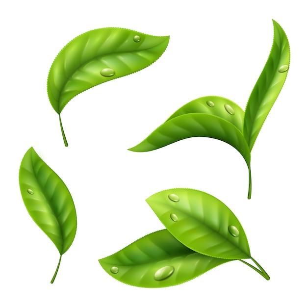 Folhas de chá verde realista com gotas sobre fundo branco Vetor Premium
