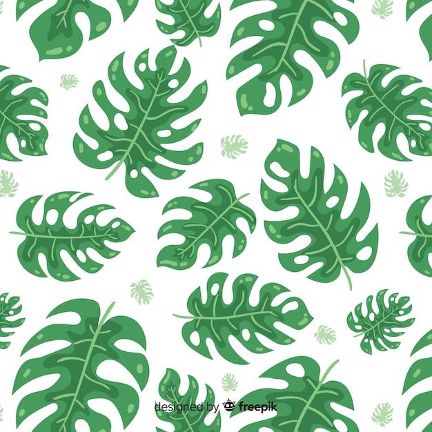 Folhas de monstera Vetor grátis