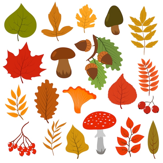 Folhas de outono amarelas, cogumelos e bagas. Vetor Premium