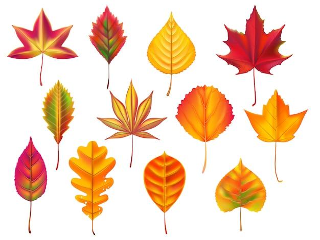 Folhas de outono folha caída, lixo de folhas secas de outono seco e natureza outubro caindo deixa conjunto Vetor Premium