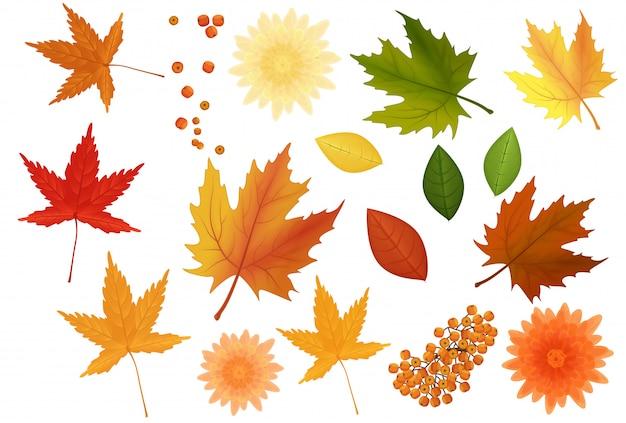 Folhas de outono realistas e conjunto de flores Vetor Premium