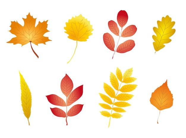 Folhas de outono Vetor Premium