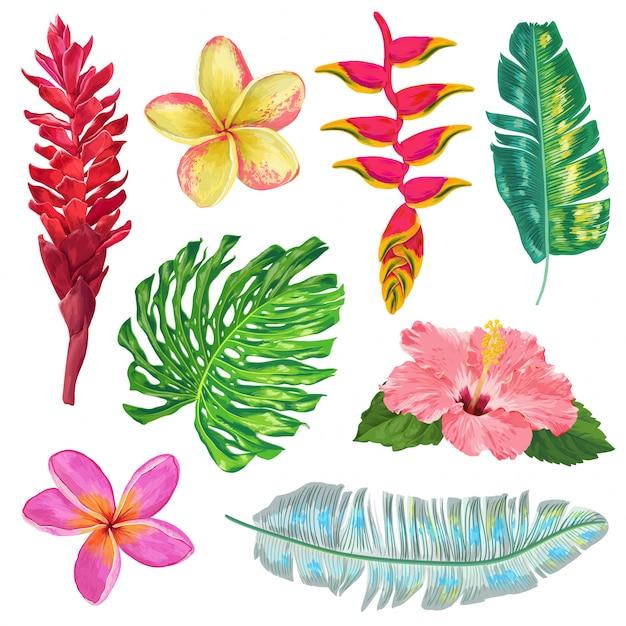 Folhas de palmeira, monstera e conjunto de flores exóticas. coleção floral tropical Vetor Premium