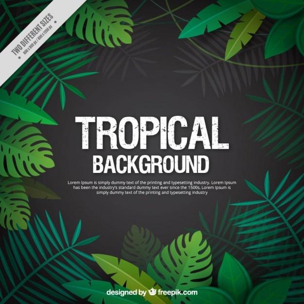 Folhas tropicais fundo Vetor Premium