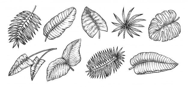 Folhas tropicais. palmeira exótica deixa a coleção de ícone do elemento. ilustração botânica de plantas de selva tropical Vetor Premium