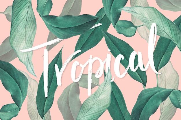 Folhas tropicais Vetor grátis