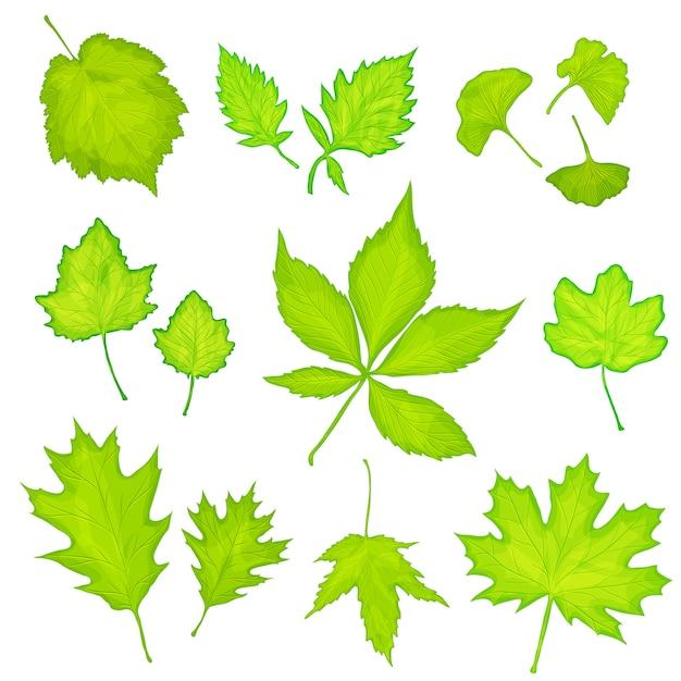 Folhas verdes isoladas Vetor Premium