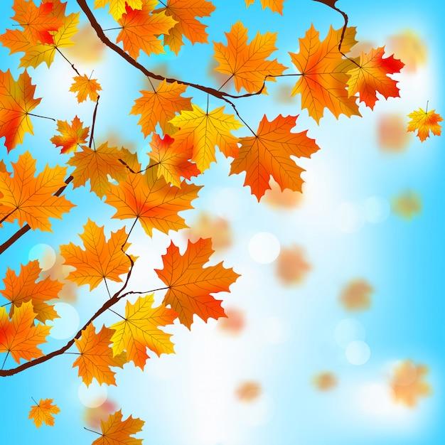 Folhas vermelhas e amarelas contra o céu azul. Vetor Premium