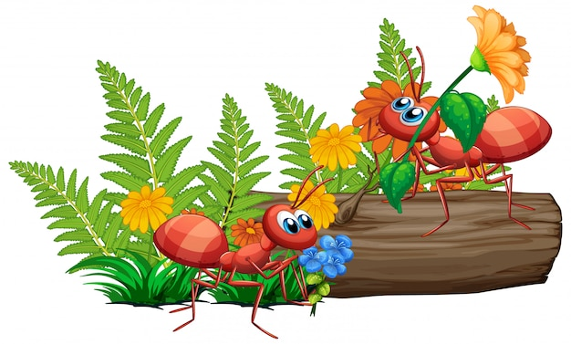 Formigas na natureza em fundo branco Vetor grátis