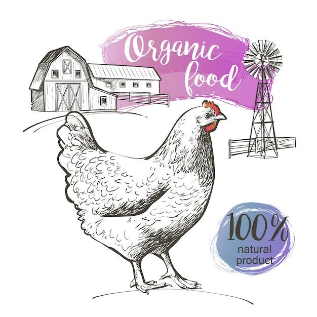 Frango e fazenda Vetor Premium