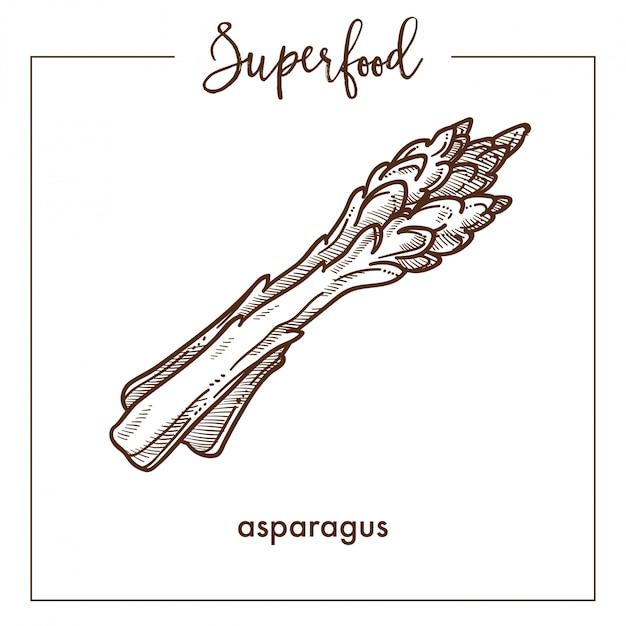 Fresco, saudável, espargos, ramos, monocromático, superfood, sepia, esboço Vetor Premium