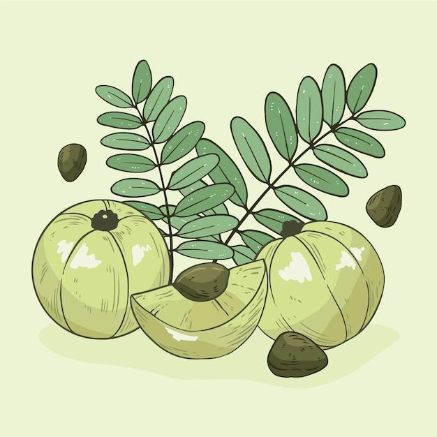 Fruta amla desenhada à mão ilustrada Vetor grátis