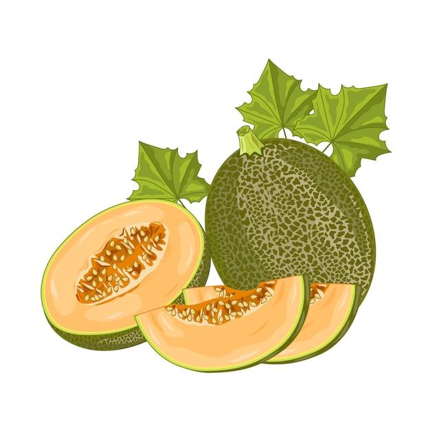 Fruta melão em branco Vetor Premium